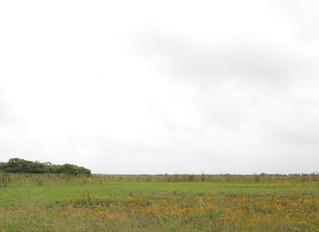 Land for Agape Ranch!