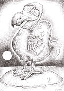 DODO Ink drawing