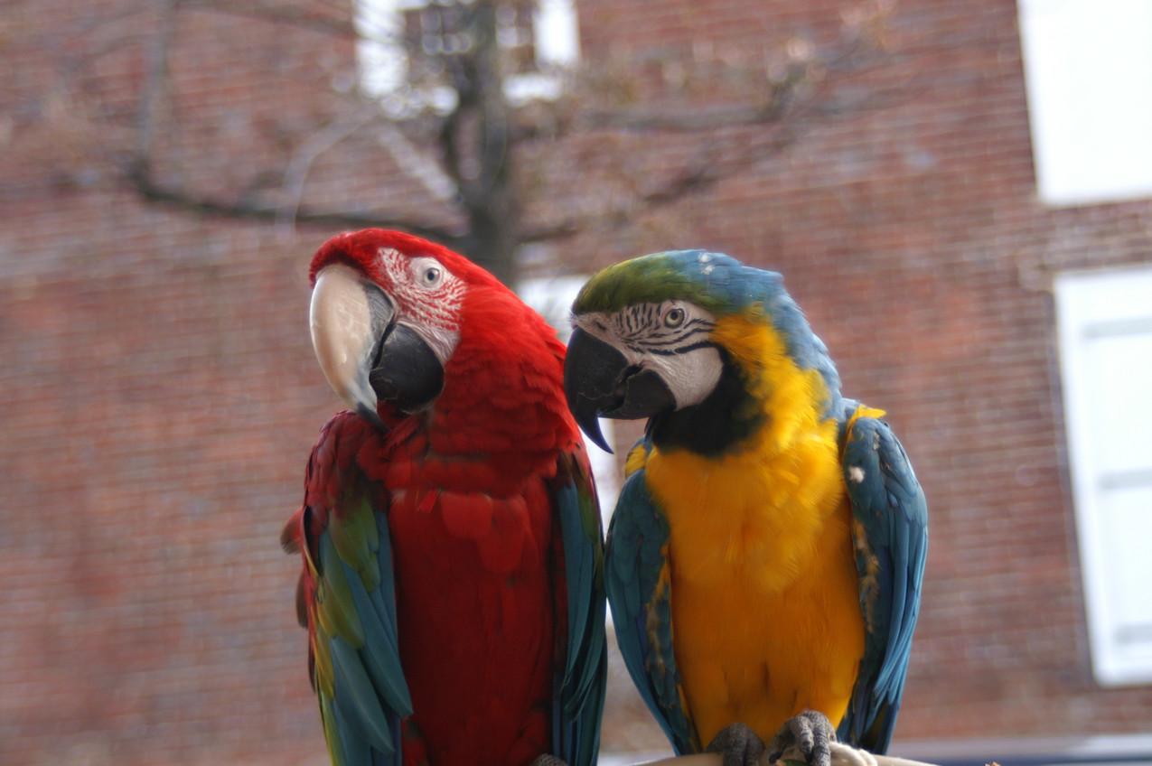The Street Parrots