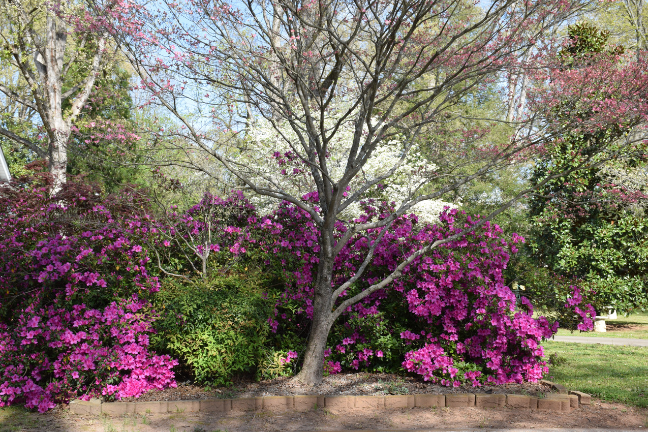 The beauty of spring in South Carolina