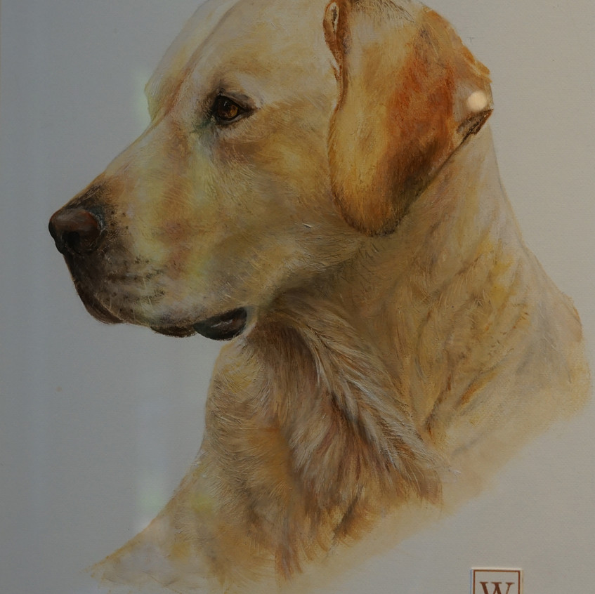 Mamie (Golden Labrador) by Wendy Rogers oil on acid free museum quality paper