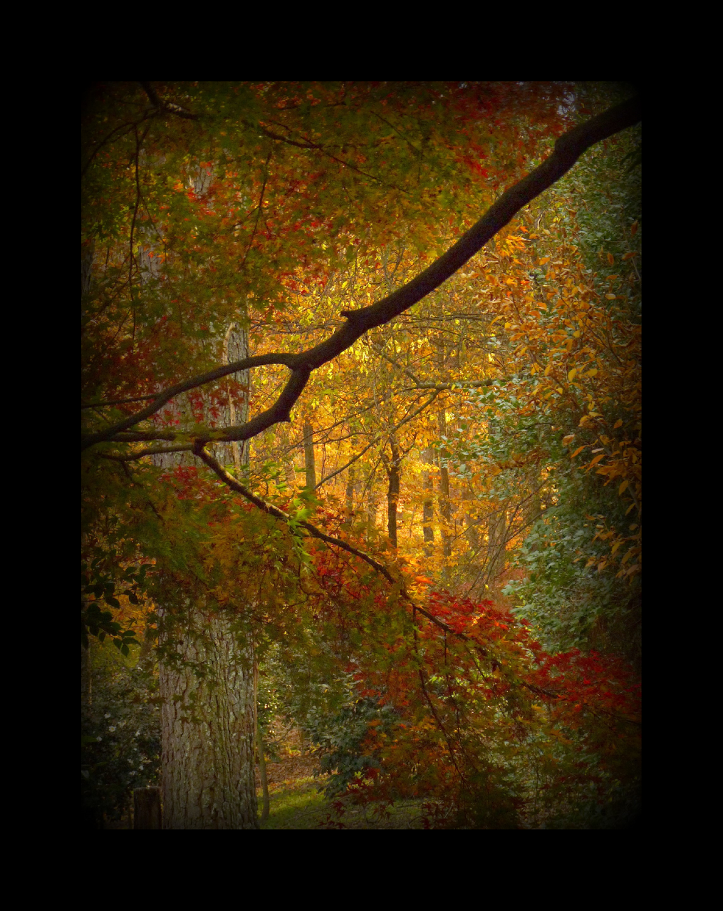Fall, window into color