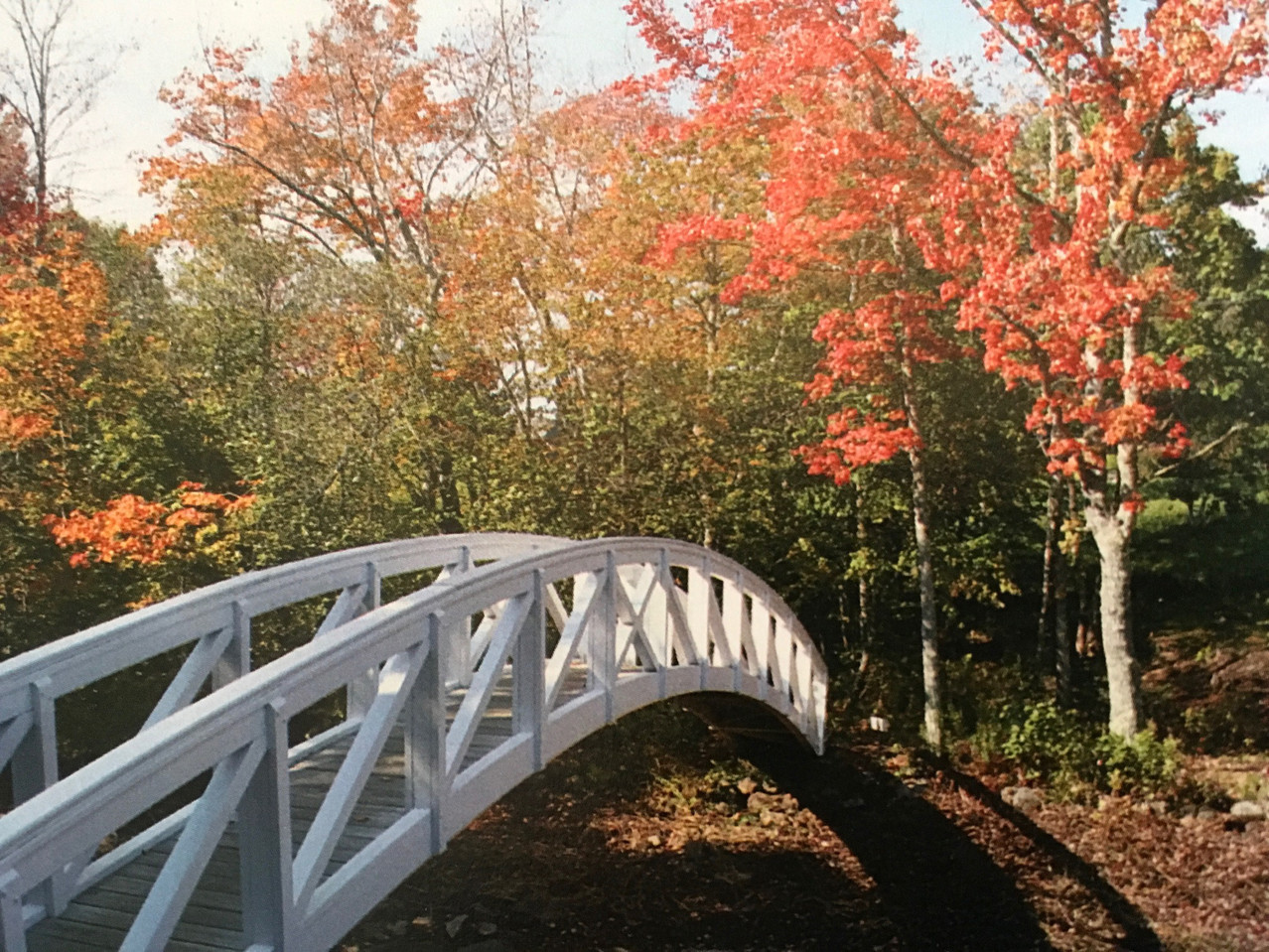 Autumn Bridge