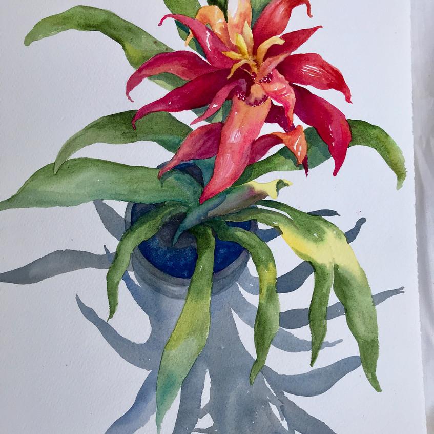 Bromeliad Beauty by Ruth Hopkins