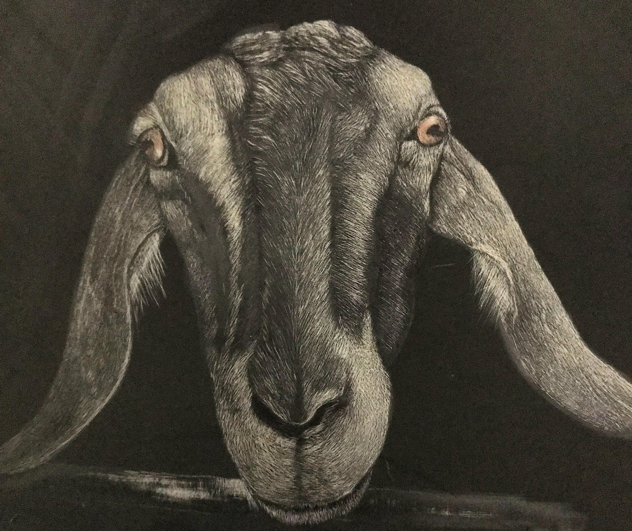 One I'm working on of my daughter's goat