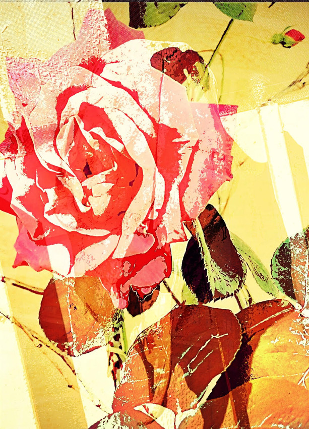 The Textured Rose