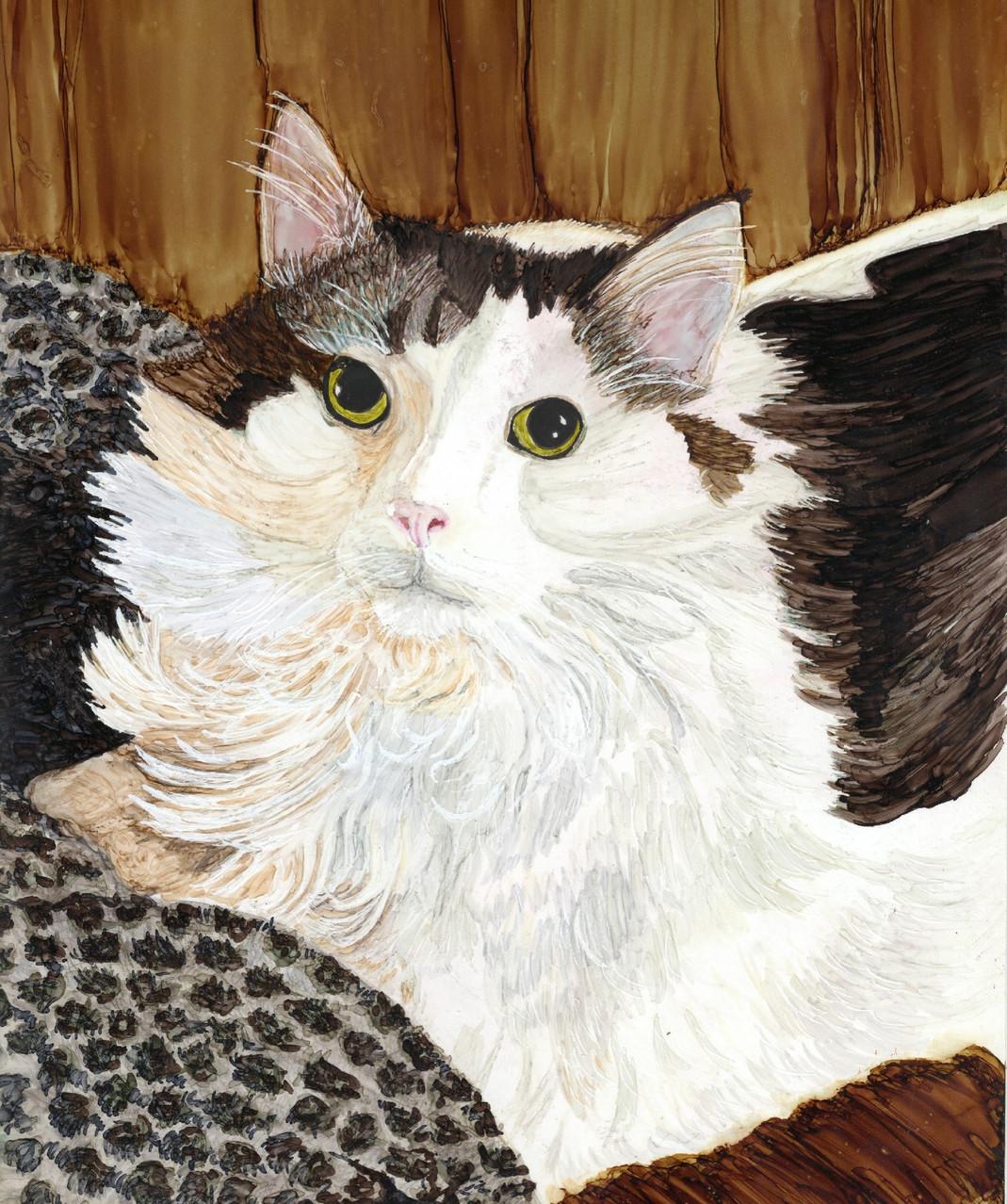 Cat, felix