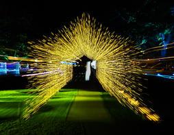 Tunnel of light.jpg