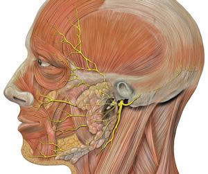 Paralisia Facial e a fisioterapia como tratamento