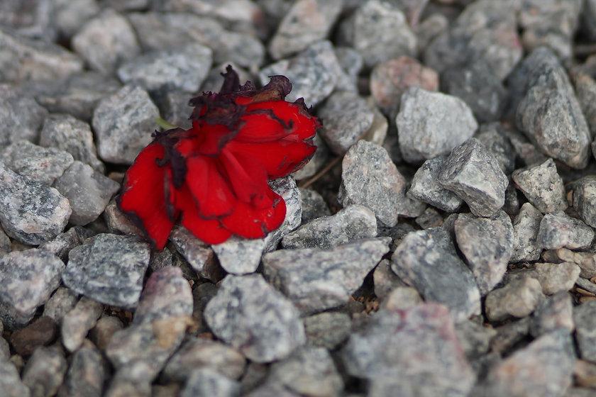 redfloralstone.JPG