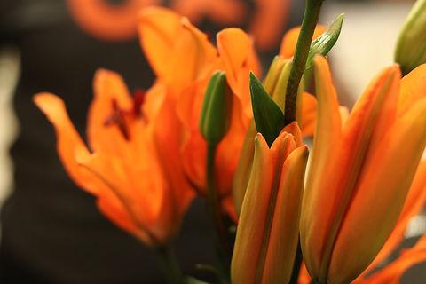 orangebloom.JPG