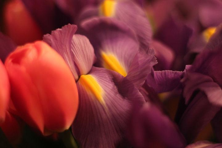 purplefloral.JPG