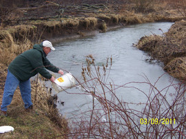 Larry Meyers stocking the Sewickley Creek.