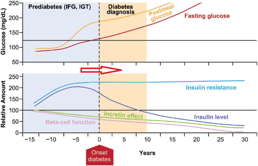 이전 공복 혈당 124로 당뇨 기준에 근접했던.. 이번 검사에서 당뇨로 진행확인 - 동대문구 답십리, 전농동, 우리안애 우리안愛 내과