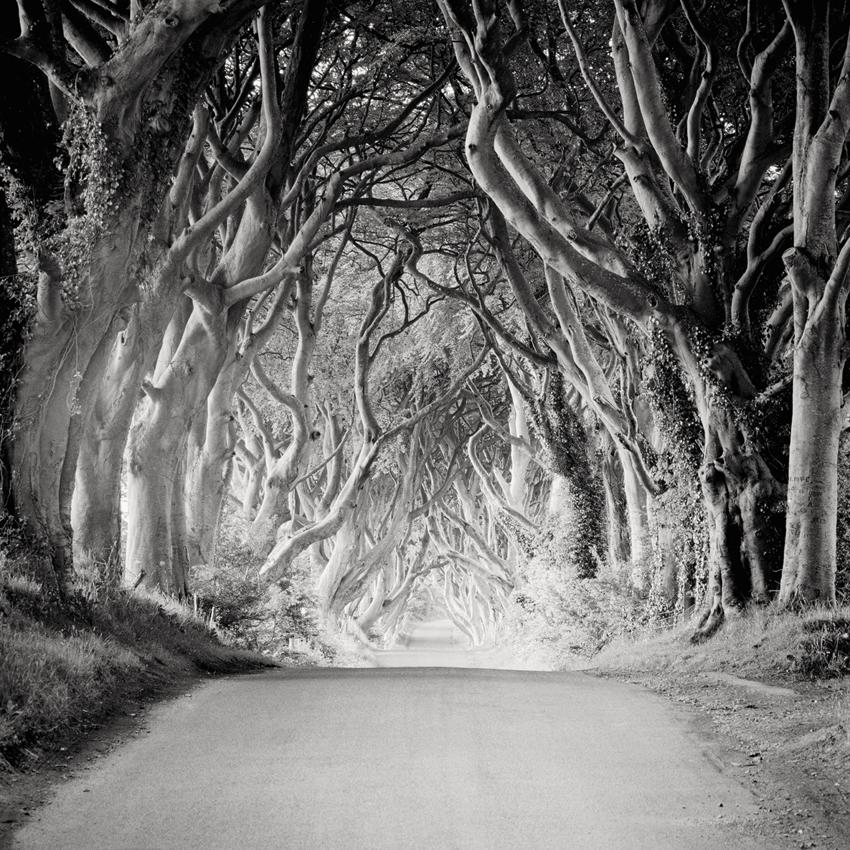 The-Dark-Hedges-Ireland-Silverfineart-Photography-Gerald-Berghammer-Ina-Forstinger