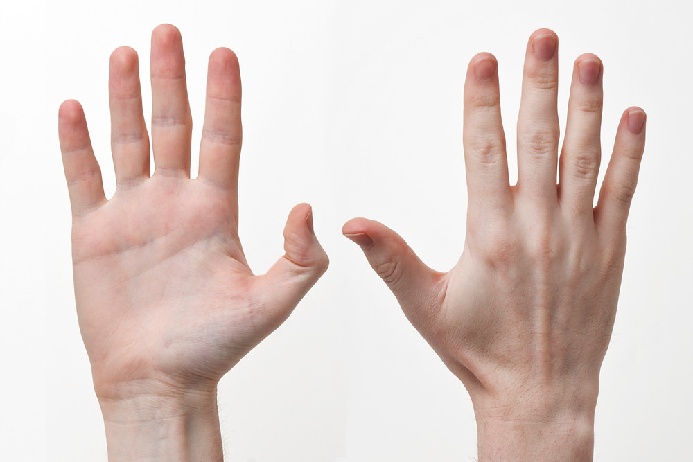 Human-Hands-Front-Back wikimedia.jpg