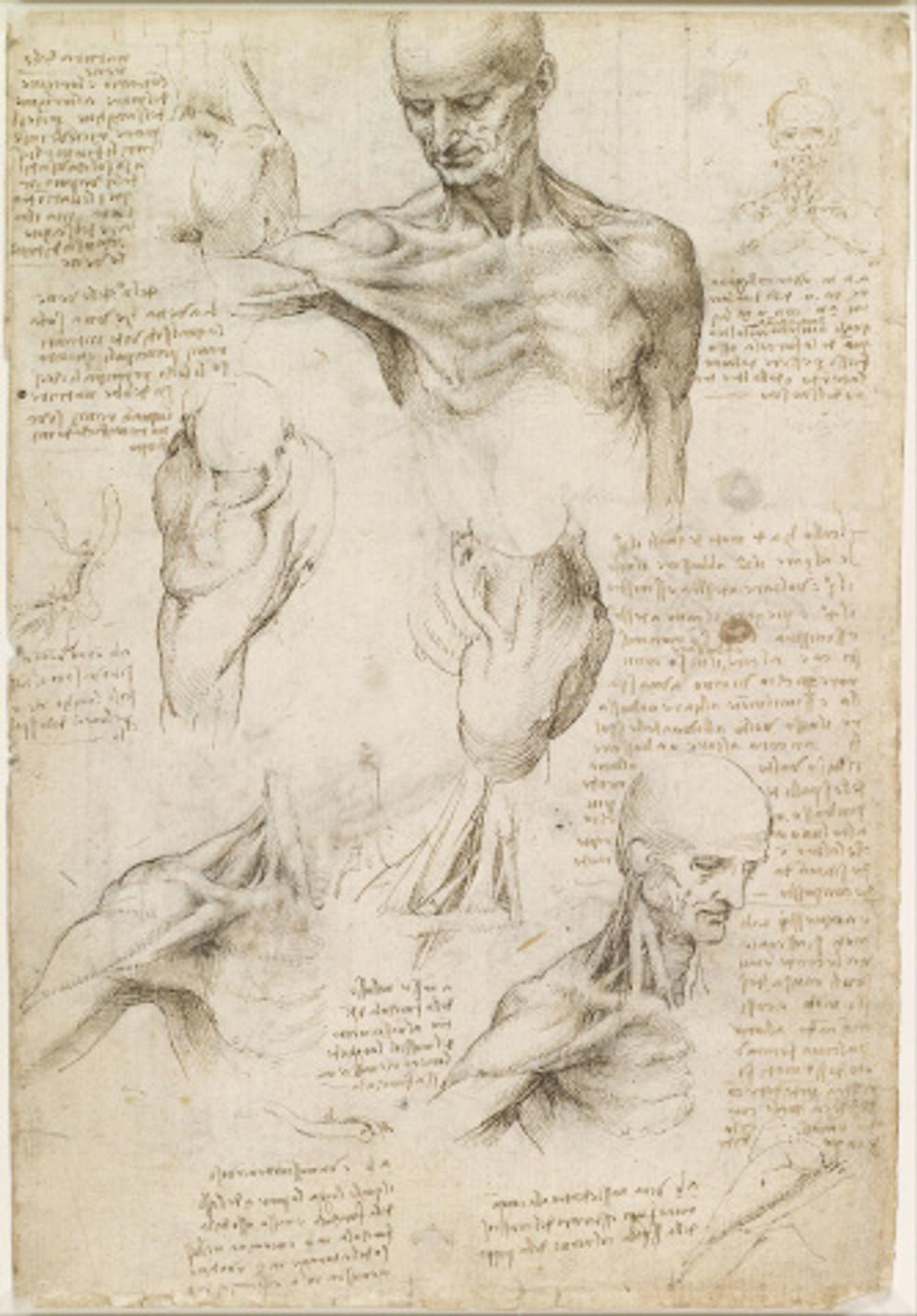 leonardo_da_vinci_-_superficial_anatomy_of_the_shoulder_and_neck_28recto29_-_google_art_project