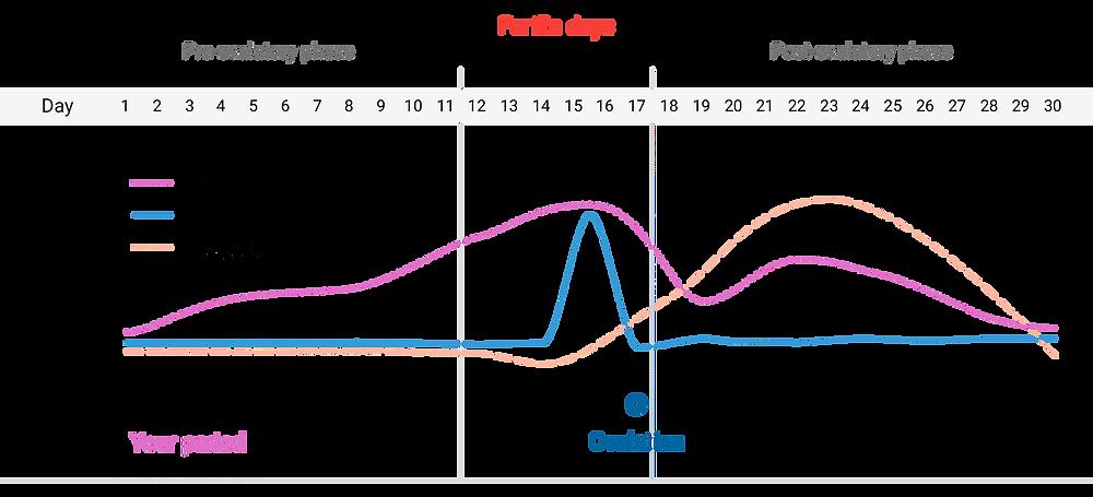 nat cycles graph