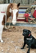 horse and dog.png