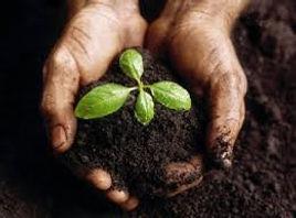 nurturing plant.jpg