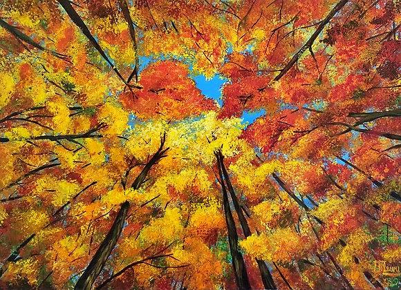 Autumn's Splendour