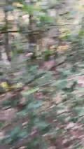 Christine dans les bois