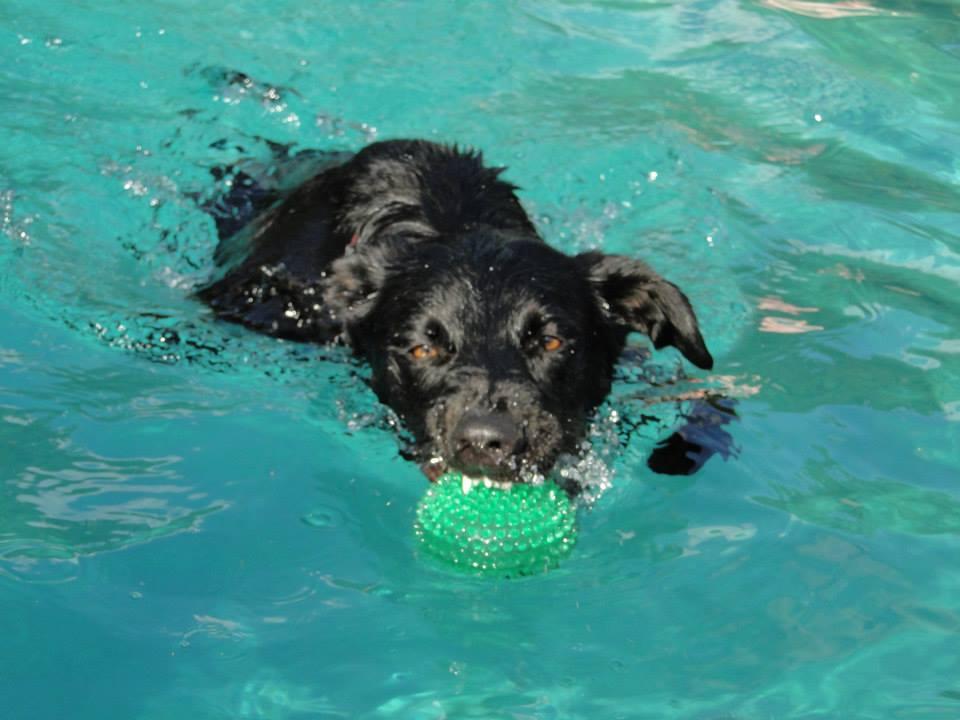 Jesse pool