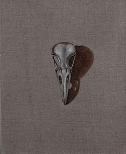 Cabinet_Nicole_Maatsuyker Island Raven Skull