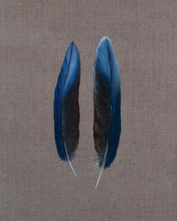 Cabinet_Nicole_Maatsuyker Island Rosella Feathers