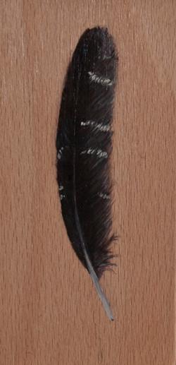 Cabinet_Nicole_Maatsuyker Island Unidentified feather