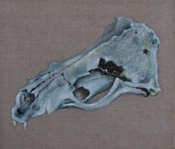 Nicole_Maatsuyker Island Seal Skull