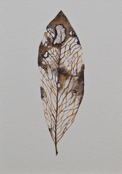 Cabinet_Nicole_Maatsuyker Island Leaf I