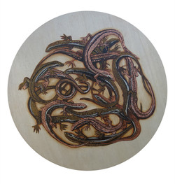 Black Witch Knot of Skinks