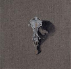 Cabinet_Nicole_Maatsuyker Island Shearwater Skull