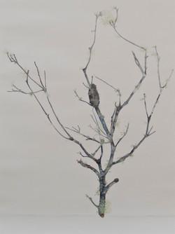 Nicole_Maatsuyker Island Banksia Branch