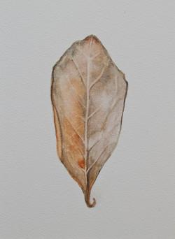 Cabinet_Nicole_Maatsuyker Island Leaf III