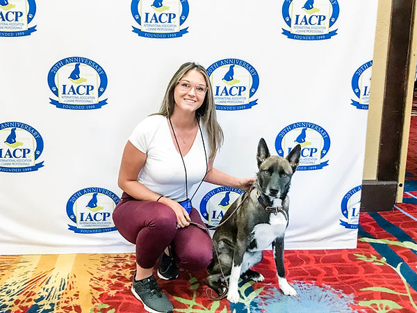 Wise Tails Academy Dog Training Best Dog Trainer in Texas Internation Association of Canine Professionals IACP