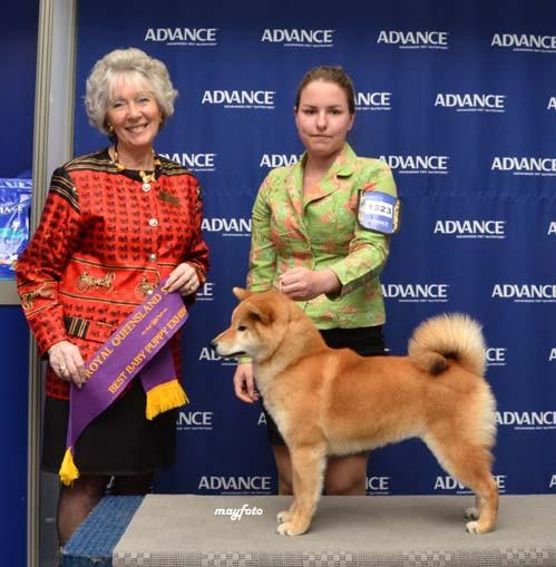 Denver Brisbane Royal 2011.jpg