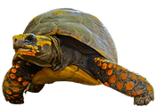 tortugas_edited.png