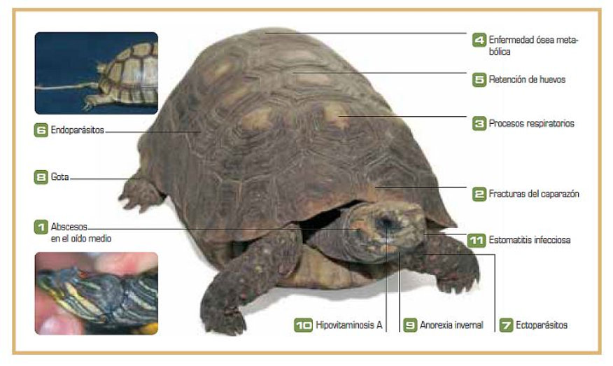 Enfermedades de Tortugas 1.JPG