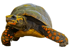 tortugas.png