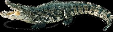 cocodrilo.png