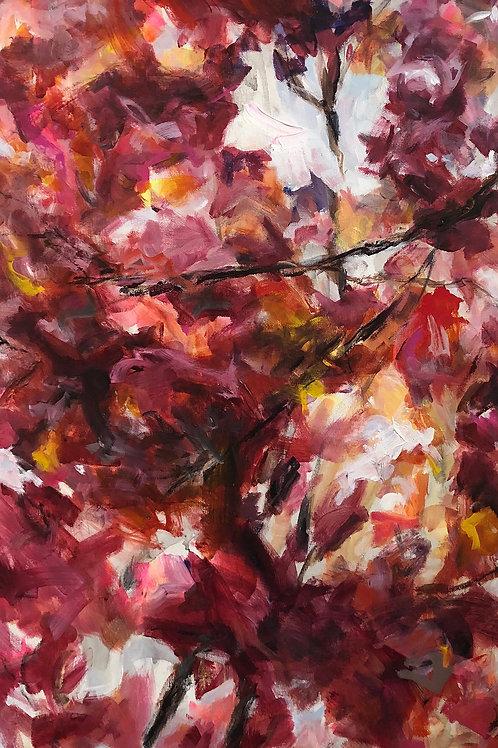 Autumn Blaze II