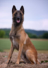 Askan Bettwanzen-Spürhund für die Schweiz und Deutschland