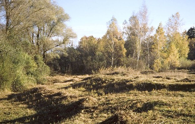 schutzgebiet_lochhauser_sandberg.jpg