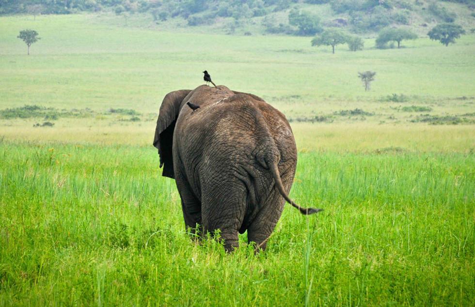 apoka elefant.jpg