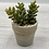 Thumbnail: Set of 4 Petite Artificial Succulents