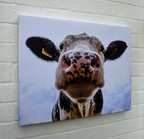 "Cow Canvas 20"" X 16"""
