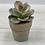 Thumbnail: Set of 4 Petite Artificial Succulents