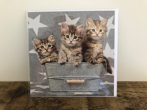 Kittens in Bucket Greetings Card